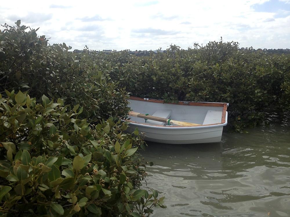 earl in mangroves (Custom)